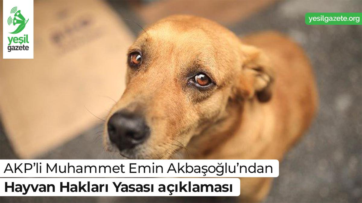 Muhammet Emin Akbaşoğlu, Mecliste düzenlediği basın toplantısında hayvan hakları ve İnsan Hakları Eylem Planı'na dair açıklamalarda bulundu.  Ayrıntılar: https://t.co/0H1qqRkf3R  #yeşilgazete #hayvanhakları https://t.co/EKHJOhsboY