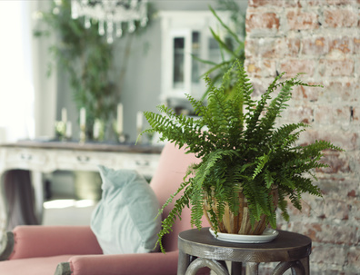 Plants aren't just for decor, they offer tremendous benefits for your health and mood. Learn More on our Blog -   . . #decor #homedecor #plants #plantsmakepeoplehappy #houseplants #planters #healthyliving #healthyhome #healthylife #homechanneltv