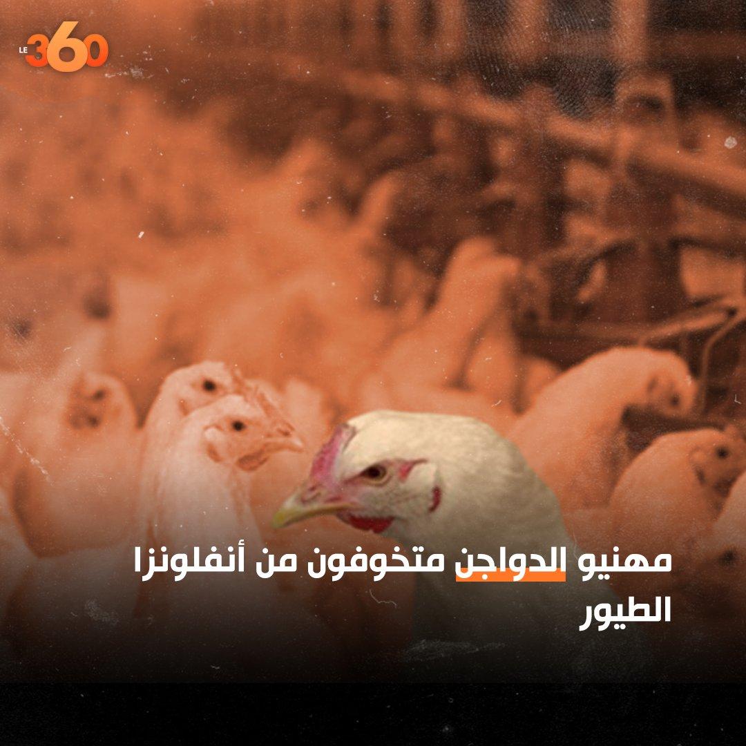 دعت الجمعية الوطنية لمربي دجاج اللحم بالمغرب الجهات الوصية على القطاع، إلى «إتخاذ الإجراءات اللازمة لحماية المنتوج الوطني من انفلونزا الطيور».  #دجاج #لمغرب #انفلونزا_الطيور