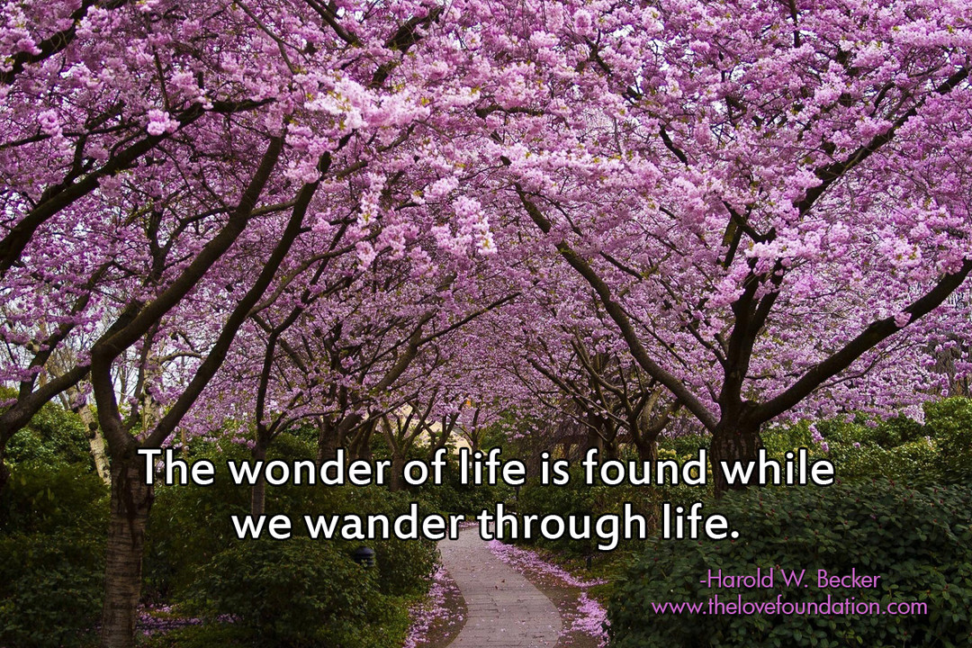 The wonder of life is found while we wonder through life. - Harold W. Becker ~ #Life