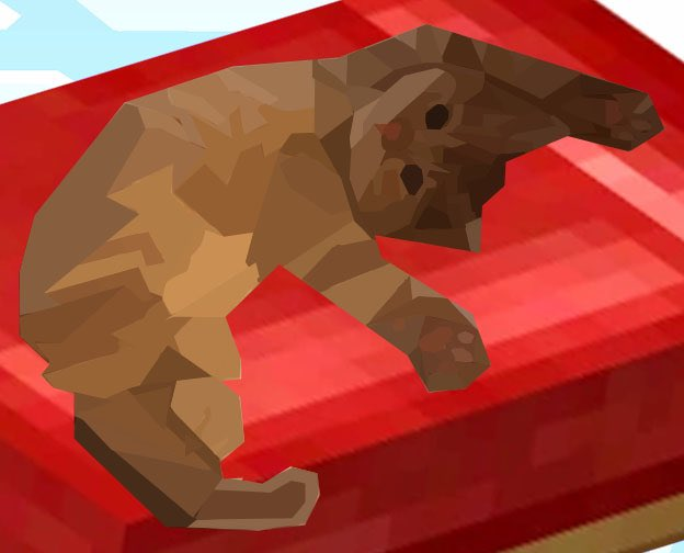 @pokimanelol @CashApp This is my baby cat queso! Sometimes also known as quesito!!  $zepplen #CashAppPoki