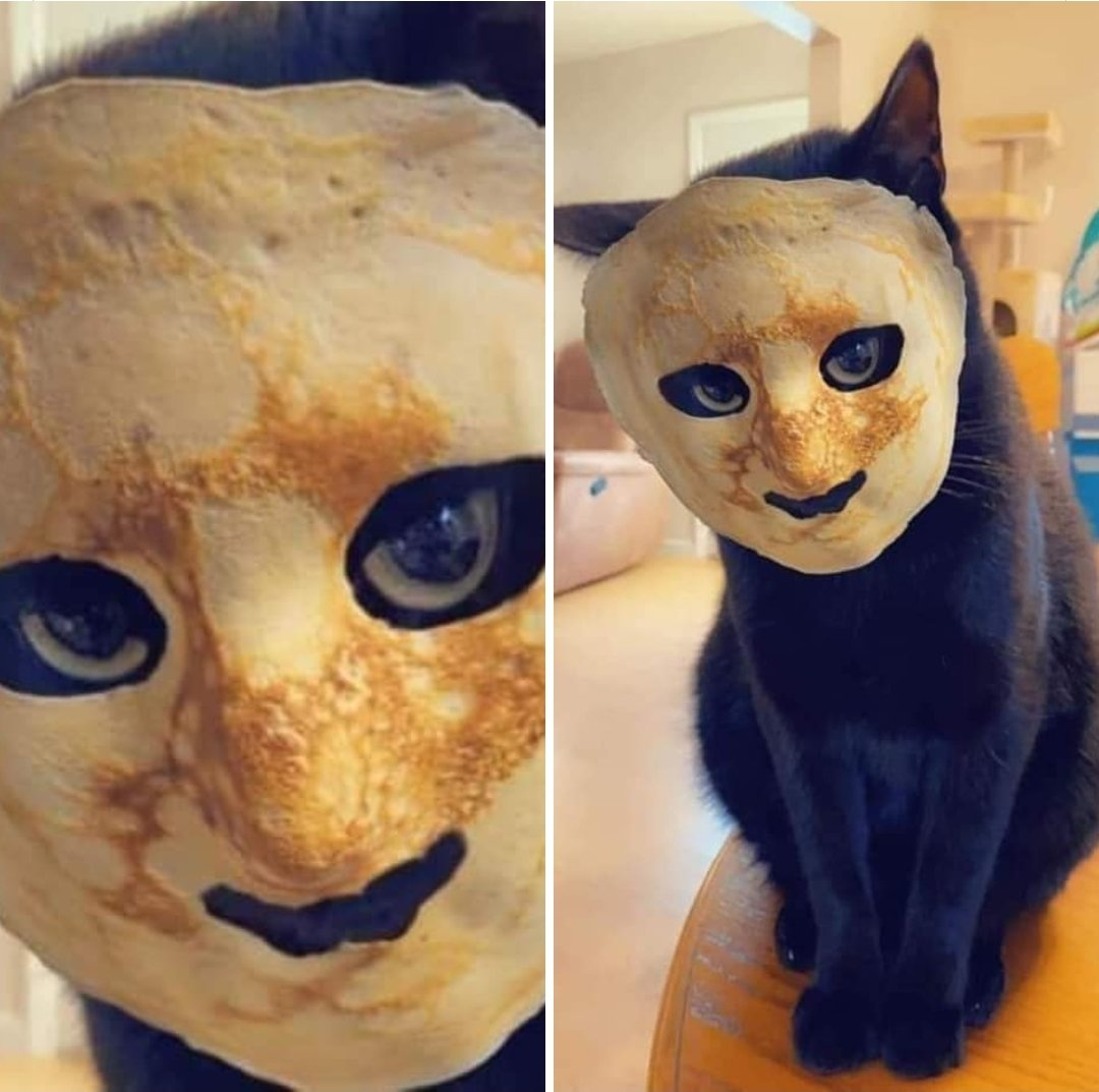 "Replying to @shadow_kylie: ""I bet it would be funny to put a pancake on my cats face""...  2 minutes later ""JESUS CHRIST!"""