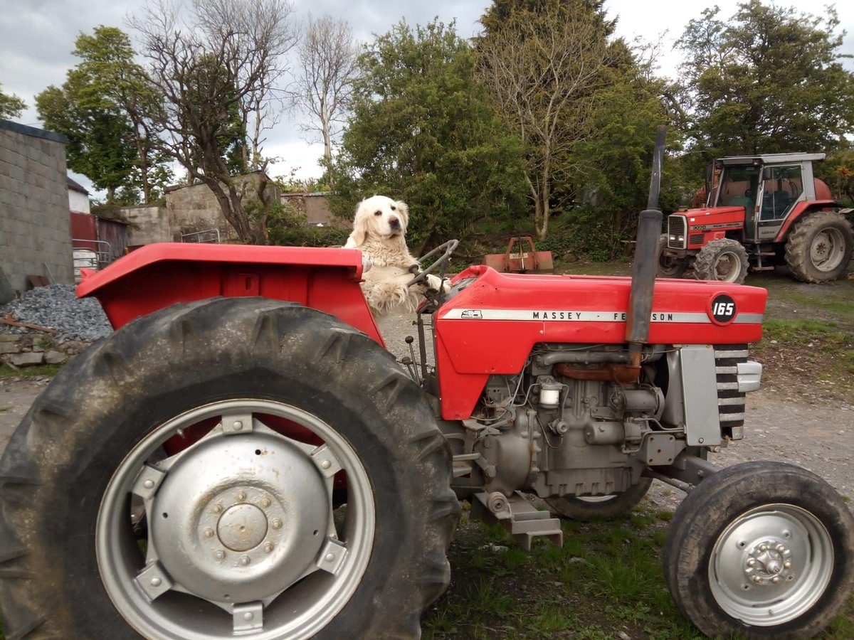 It's hard to get the staff these days🚜   Hedie the dog doing some tractor work on Richard Daly's farm a in Keady, Co Armagh👏 https://t.co/VUKevbh28U