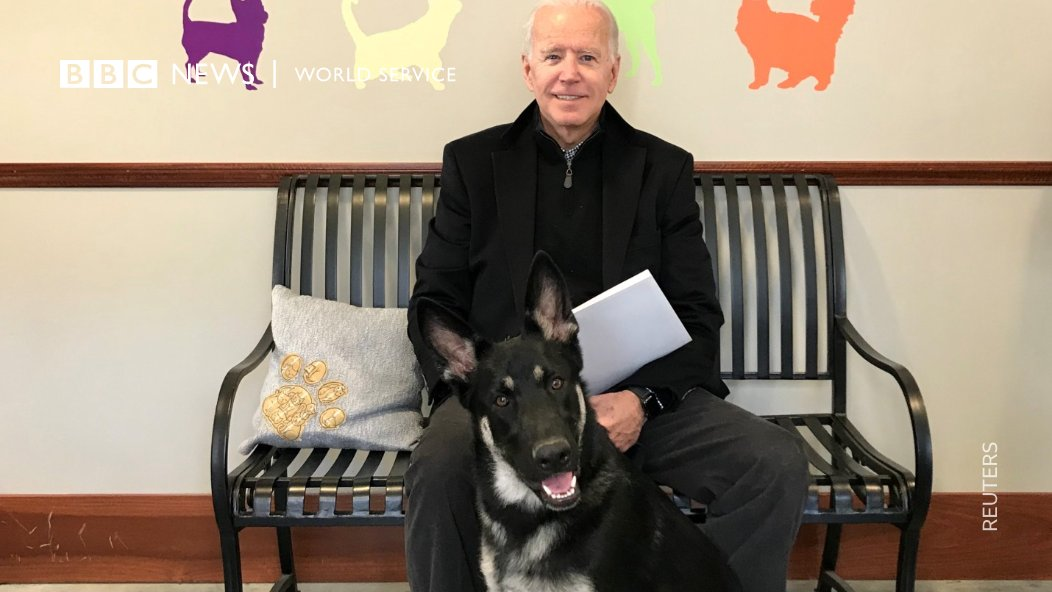 Meet the Biden's dog Major, the first shelter dog ever to live in the White House.  On Sunday, his previous shelter honoured him with a virtual #indoguration ceremony it hopes will bring awareness to rescue animals  (And of course... we had to include an image of Champ)
