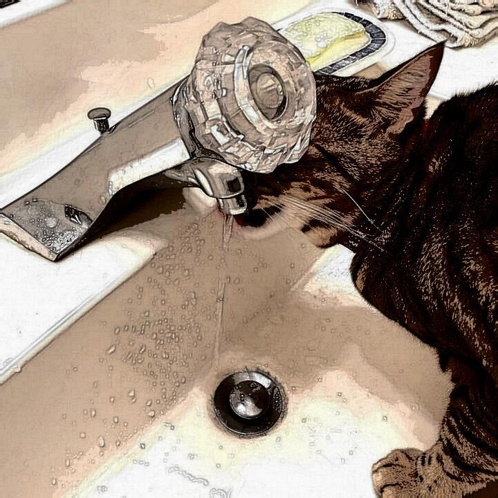 @pokimanelol @CashApp #CashAppPoki $Ksauce808 just kitty drinking some water.