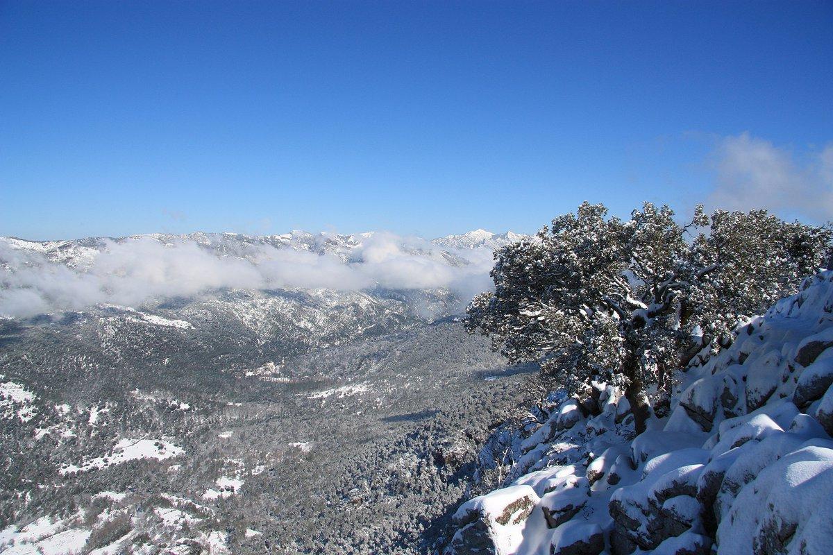 El 20, día 20 de enero del 2021. https://t.co/Vk3H0xFR8P   #Spain #España #20Enero #BuenosDias #nature #NaturePhotography #landscape #SiguemeYTeSigo #nieve #BorrascaGaetan #Gaetan #snow #photographer #photo #Madrid #wildlife #green #Like #Likee #likeforlike #Instagram #instagood https://t.co/2i4KVpcRAT