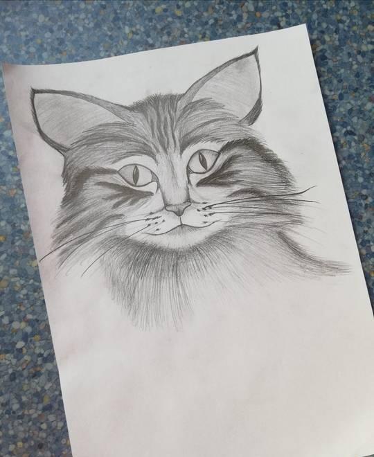 @pokimanelol @CashApp This is my cat. She's name is Pippi 💜 #CashAppPoki