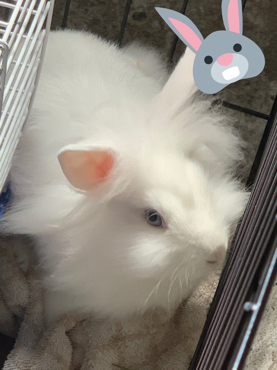 @pokimanelol @CashApp #CashAppPoki  here's a pic of my bun! $rholiday14