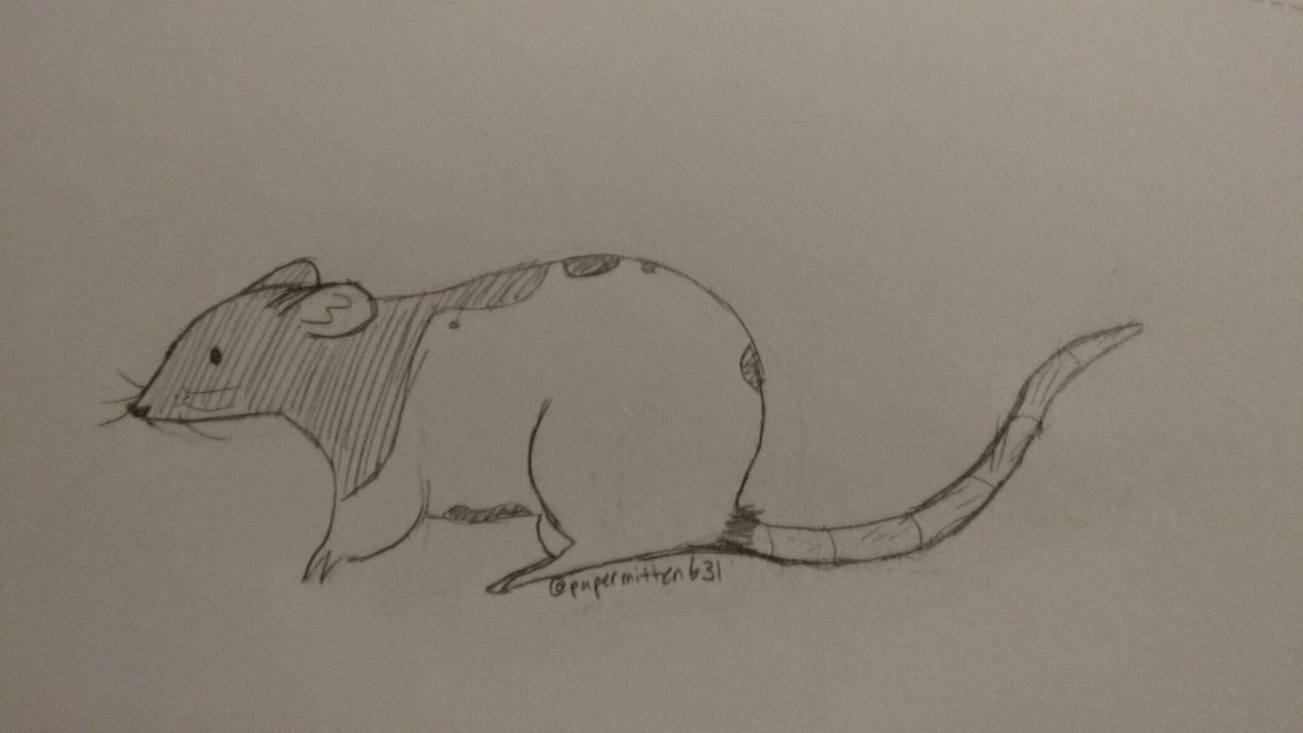 this drawing was for the #CashAppPoki thingy but i've never done such a good drawing of my rat son in the year and sum months that i've had him