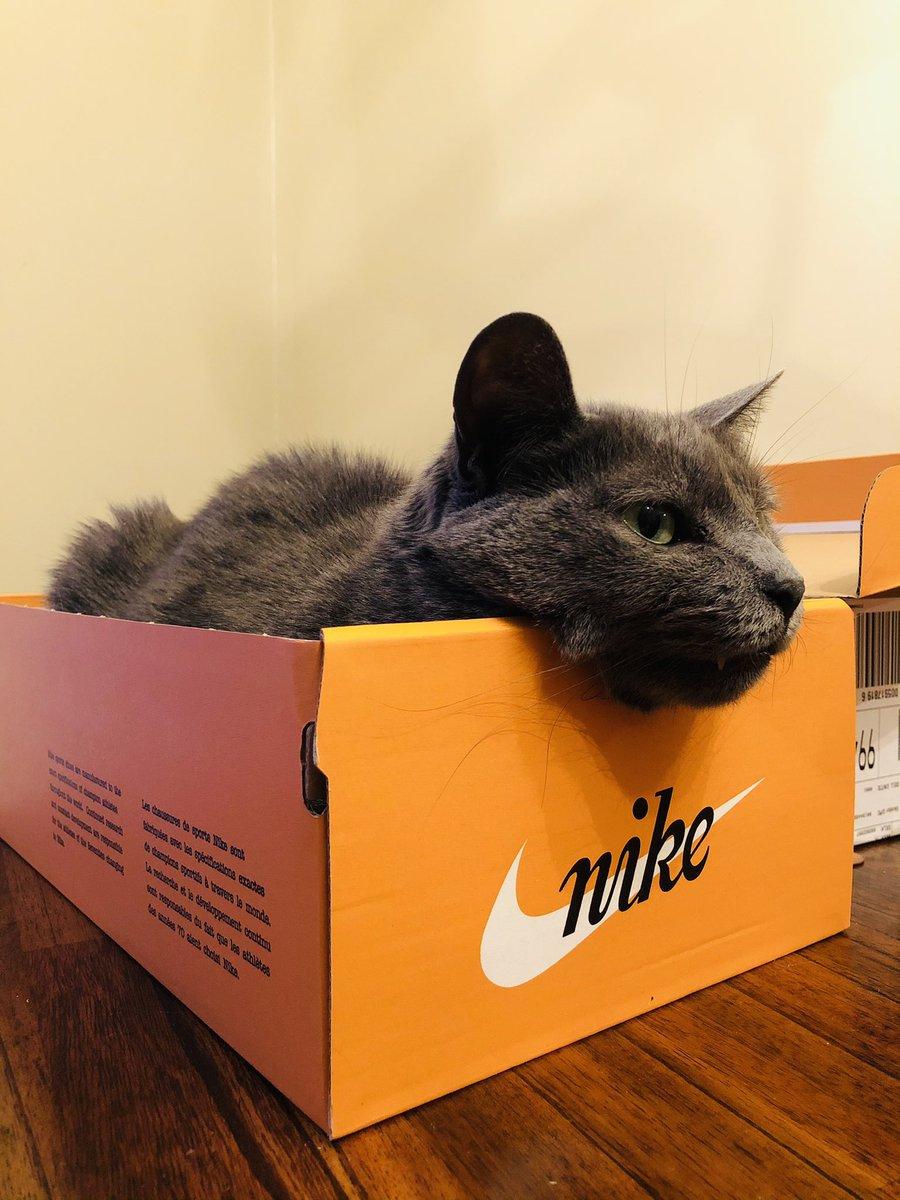 @Nike make any cat products? Mine loves your stuff!!!! @nikefootball @nikestore @usnikefootball @nikesb   #nike #cat #box #sneakers #bed #precious #lol