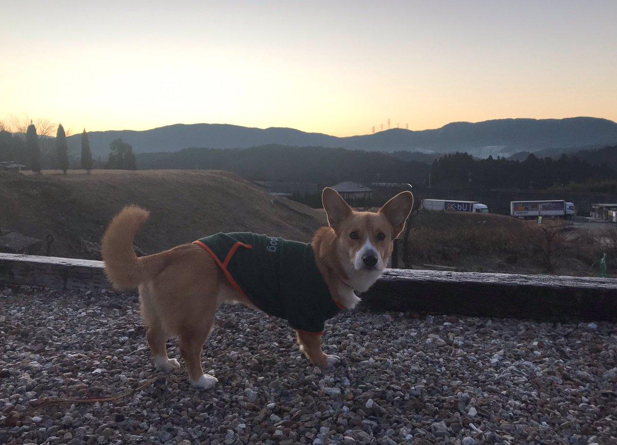 おはようございます!快晴の恵那です☀️気温は−6℃と昨日ほどではないけど冷え込みました🥶今朝は、田んぼコースを散歩🐾途中、久しぶりにユズ君とワンプロ🐶日中は10℃を超えて暖かくなりそう😊今日もよろしくお願いします! https://t.co/qVbdbtJRxe
