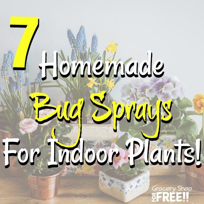 7 Homemade Bug Sprays For Indoor Plants!    #gardenlovers #inmygarden #instaplants #instagardeners #iloveplants #indoorplants #plantsofinstagram #indoorgarden #eatwhatyougrow #kitchengarden #grownfromseed #indoorgardening #gardengoals #plantsmakepeopl