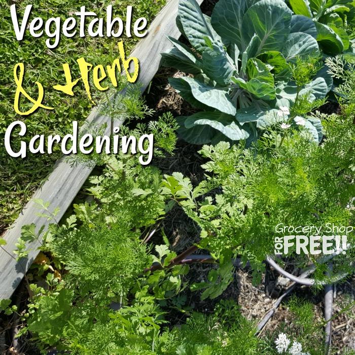 The Secret To A Perfect Vegetable & Herb Garden Is Easier Than You Think    #gardenlovers #inmygarden #instaplants #instagardeners #iloveplants #indoorplants #plantsofinstagram #indoorgarden #eatwhatyougrow #kitchengarden #grownfromseed #indoorgardeni