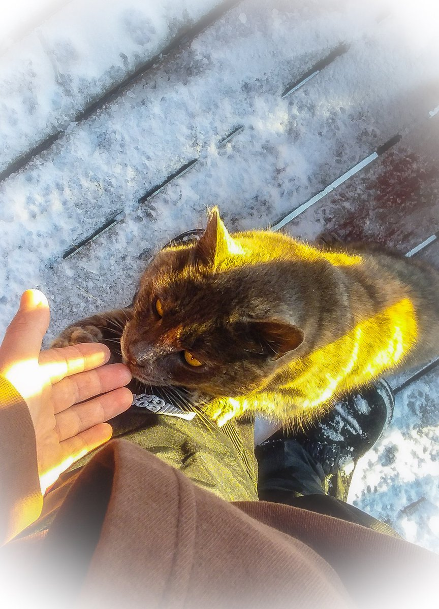 #hand #cat #boots #snowpants #sniff #lick #quote #baby #snow #pawprints #footprints #vignette #porch #photography #walk #shovel #nature #beauty #winter #january #precious #cute #animal #country #teeth #curious #hoodie   #eyes #paws #climb #sunshine #rays #shadows