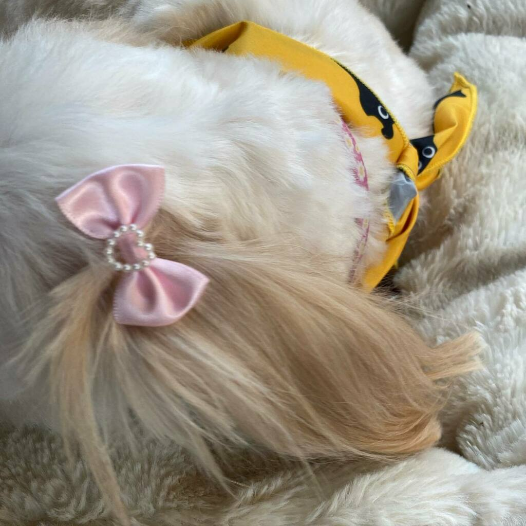 Spa day blues #sulking #Precious  #puppy #dog