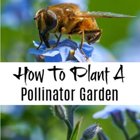 How To Grow A Pollinator Garden And Plants That Attract Pollinators    #gardening #garden #bees #pollinate #pollinators #iloveplants #plantlover #instaplants #plantsmakepeoplehappy #plantlove #organicgarden #homegrown #urbanfarming #gardeningtherapy #