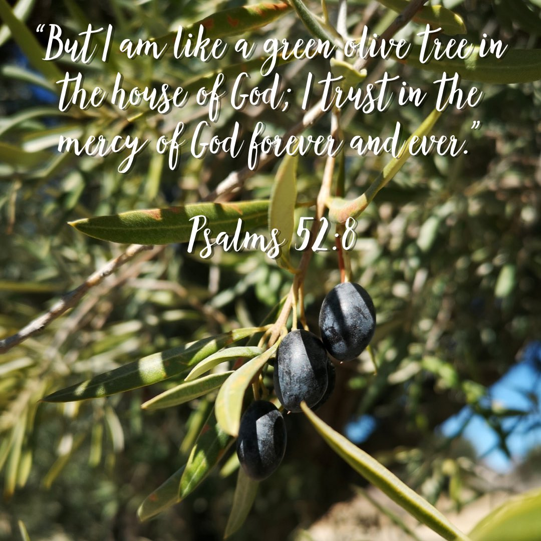 Psalm 52:8 #Jesus #love #good #photography #perfect #thursdaymorning #faith #joy #thursday #true #verse #thursdaymotivation #mercy #success #bible #january #art #daily #friends #olive #tree #bibleverse #blessed #peace #hope #prayer #goodmorning #kind #morning #patience #Scripture https://t.co/hFZHy1fpha