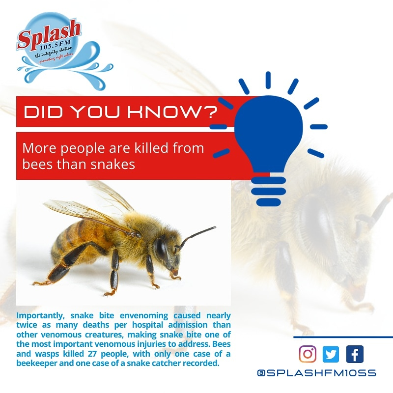 More people are killed from bees than snakes #DidYouKnow ? 🤔  #amassknowledge  #bees #learnsomethingnew  #splashfm1055