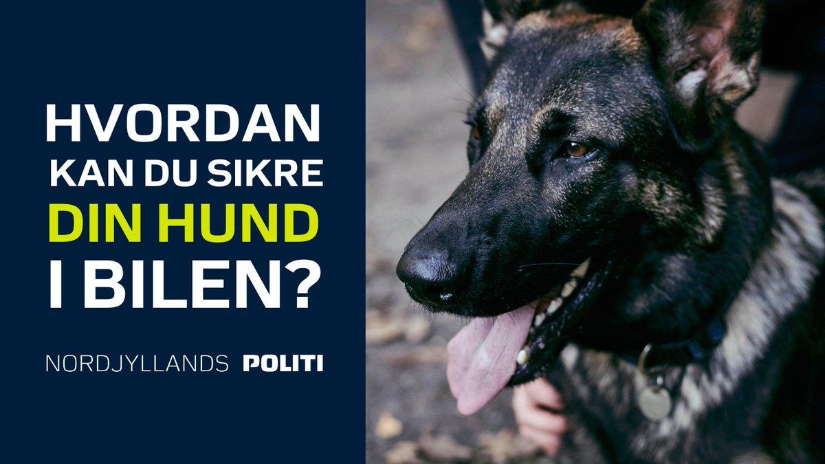 Hvordan kan du fx sikre din hund, når I kører en tur sammen? 🐶  #sikkertrafik #politidk  Læs mere på:   ➡ https://t.co/PutRLuCfAA https://t.co/KFewNz4j3T