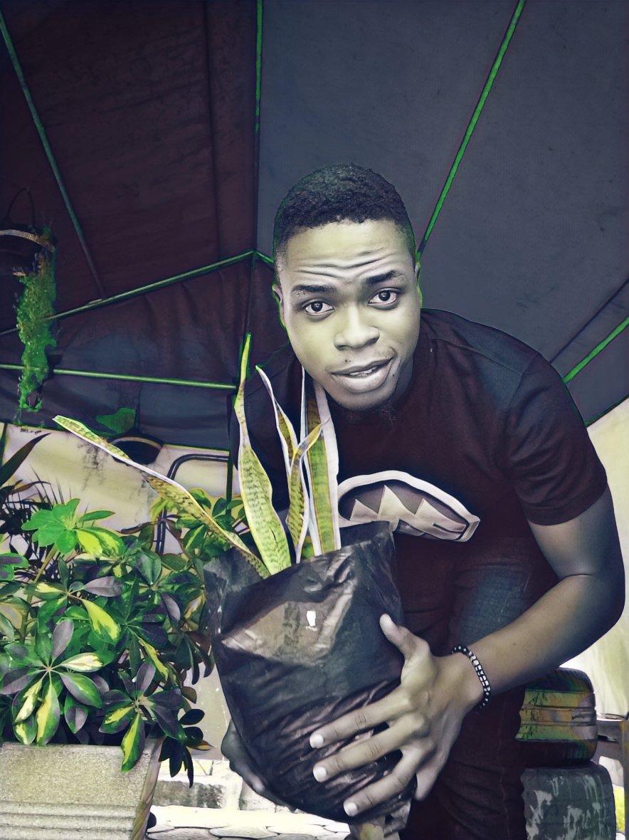 What do you know about sanseveria(Mother-in-law's tongue)?. @lardexgreenery #thursdaymorning #JoeBiden #Nigeria #indoorplants #interiordesign