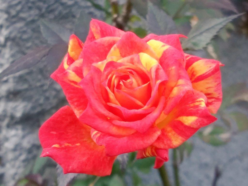 #TLを花でいっぱいにしよう     #PlantsMakePeopleHappy