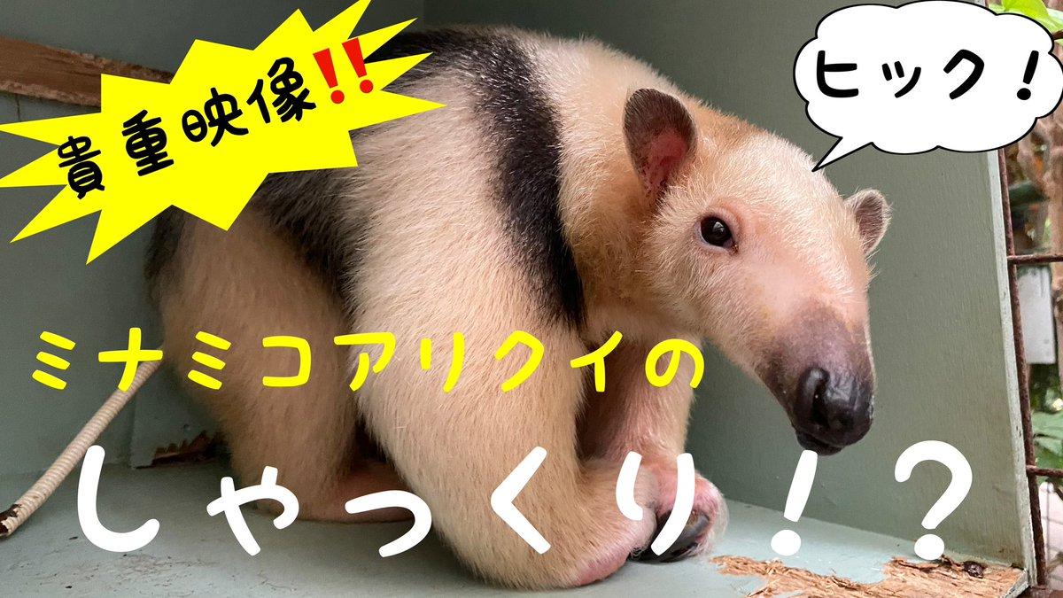 コアリクイ 速報 ミナミ