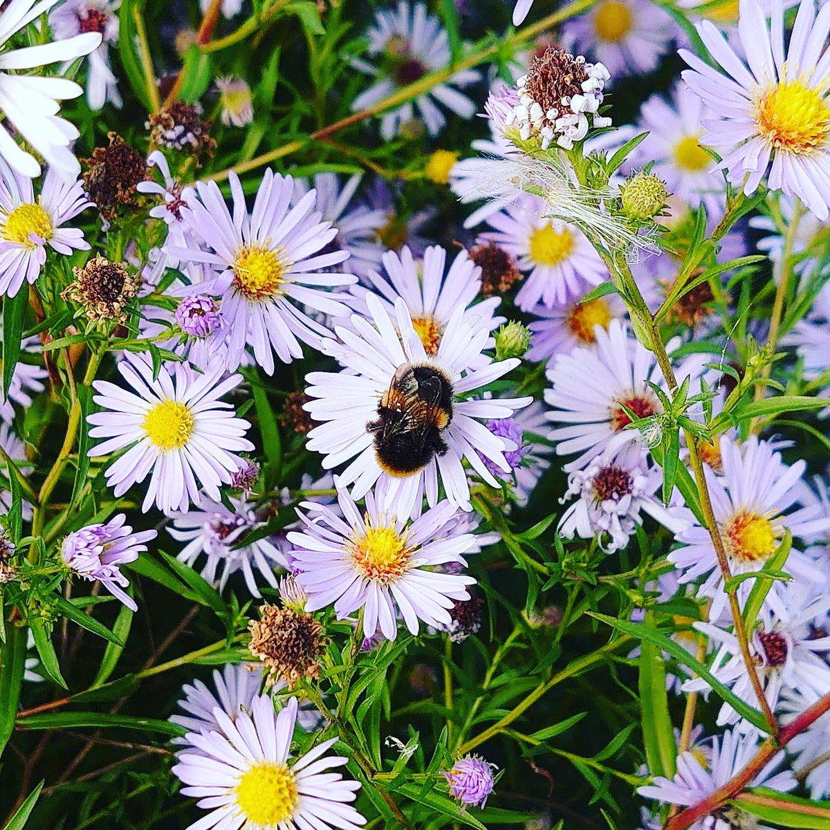 Bee happy #bees #summer #photographylovers #photography #nature