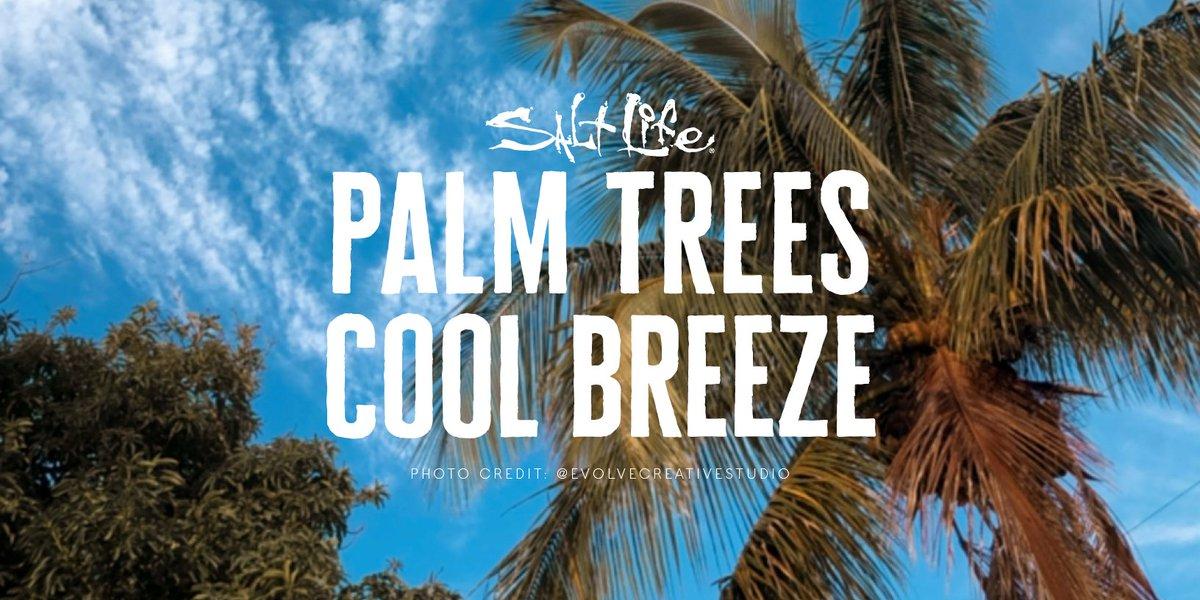 Palm Trees Cool Breeze 🌴 📷 @EvolveCreativeStudio  #ThursdayThoughts #LiveSalty