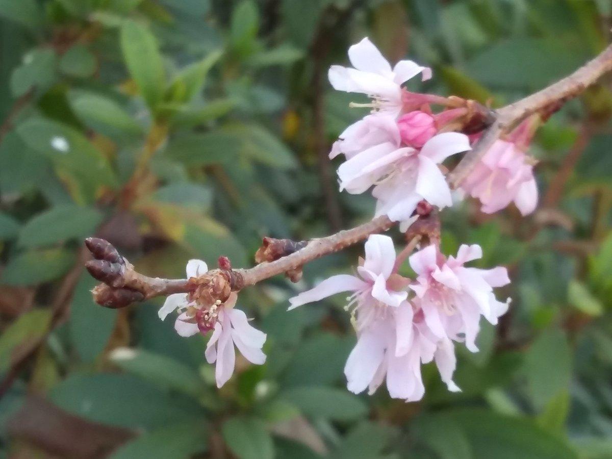 #TLを花でいっぱいにしよう    🌸 #PlantsMakePeopleHappy