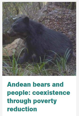 "Just under one week until @ActforWildlife join us to talk about ""Andean bears and people: coexistence through poverty reduction."" It's free to attend, follow the link to find out more!  @RGS_IBG @chesterzoo #Andeanbears #Geography #Bolivia #Andes #cheshire"