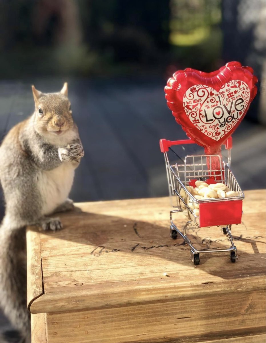 It's National Squirrel Appreciation day today so Sidney's in the limelight and he's sending you some Love 😍🐿🐾🐾❤️
