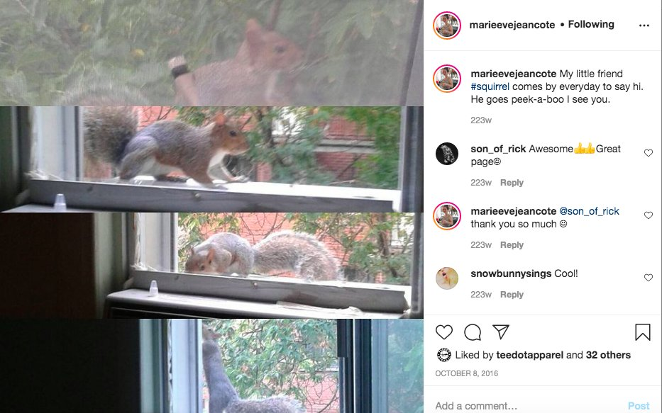 My little friend #squirrel comes by everyday to say Hi. He goes peek-a-boo I see you. #SquirrelsAppreciationDay #Same #Squirrel #Everyday #Greetings #animals #animal #pet #TagsForLikes #TagsForLikesApp #squirrels #squirrel #photooftheday #cute @NationalDayCal @CWF_FCF @WWFCanada