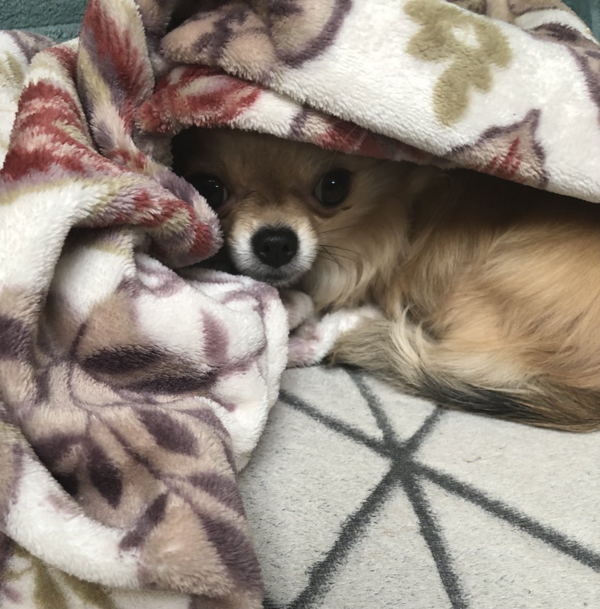 #thursdaymorning It's cold here and I don't want to leave my little den 💨