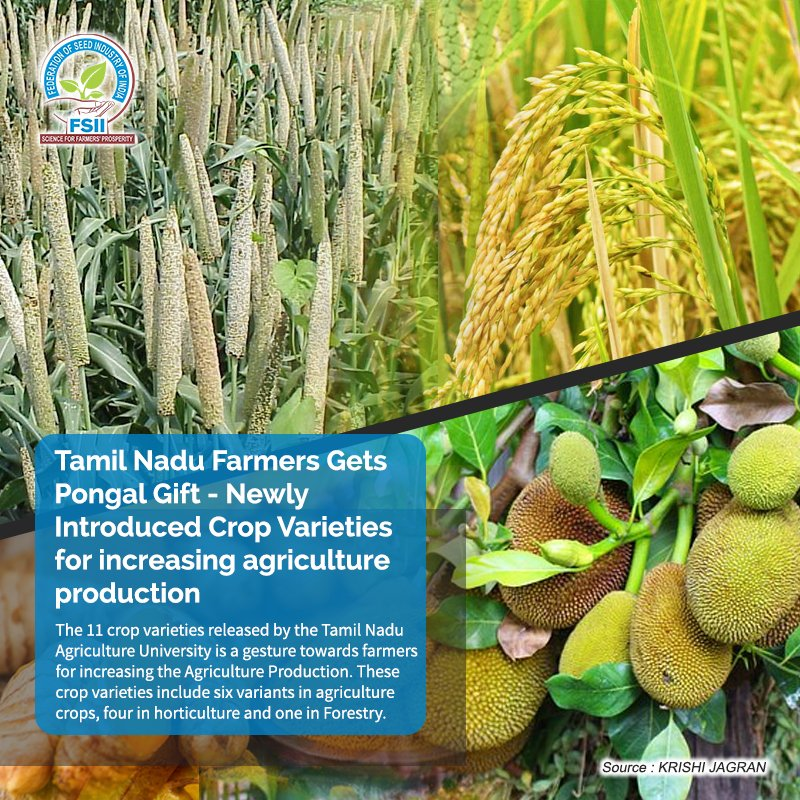 Newly introduced #crop #varieties on #Pongal will help in increasing farmers' income and improve their livelihood in the state of Tamil Nadu. @agritechportal   Source: