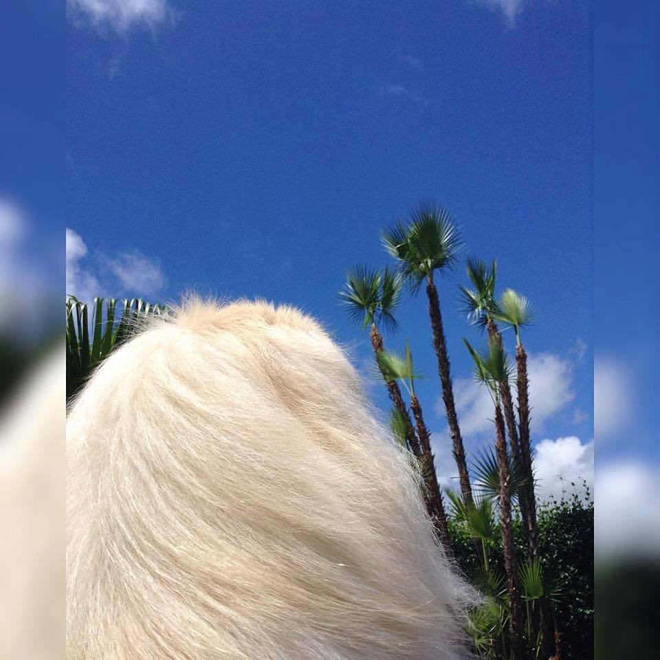 Eben if you fink life iz cloudy, you still wake up  de sky iz bloo filled wif clouds de sun still shines abuv 💙 tank dogness I'm a dog 😉 . . #bluesky #fluffyclouds #lilcaligurl #lilcaliroll #caligurl #pekingese #throughadogseyes #doglife #dogslife