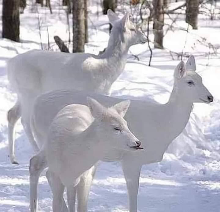 Have a lovely winter twitter day! 🤍  #WINTER #cold #snow #white #nature #naturelovers #photo #photographer #photography #thursdaymorning #thursdayvibes #ThursdayMotivation #Thursday #ThursdayFeeling #goodday #positivequotes #PositiveVibes #woods #rt #Like #Likee #follow #freeze
