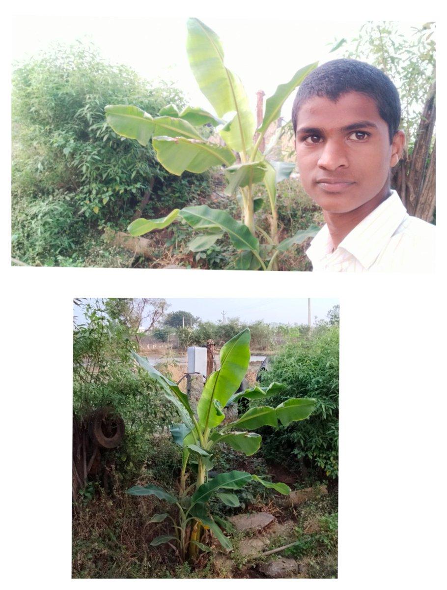 @MPsantoshtrs మన  ప్రియతమ ముఖ్య మంత్రి వర్యులు  శ్రీ కెసిఆర్ గారి జన్మదినం సందర్భంగా పెట్టినా చెట్టు  ఈ రోజు ఈ స్థాయికి   పెరిగింది  Happiness With Plant🌱 At My Field 🍀🍀 #TookASelfieWithPlant #greenindiachallenge #GIC  @MPsantoshtrs @SmitaSabharwal @HarithaHaram  #Greenindia