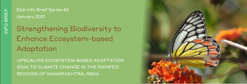 @WOTRIndia & @TMG_thinktank release Info brief on Strengthening #biodiversity to Enhance Ecosystem-based Adaptation (EbA). This is the 2nd in a 6-part series of briefs from our Upscaling EbA to #climatechange in the Rainfed Regions of Maharashtra project.