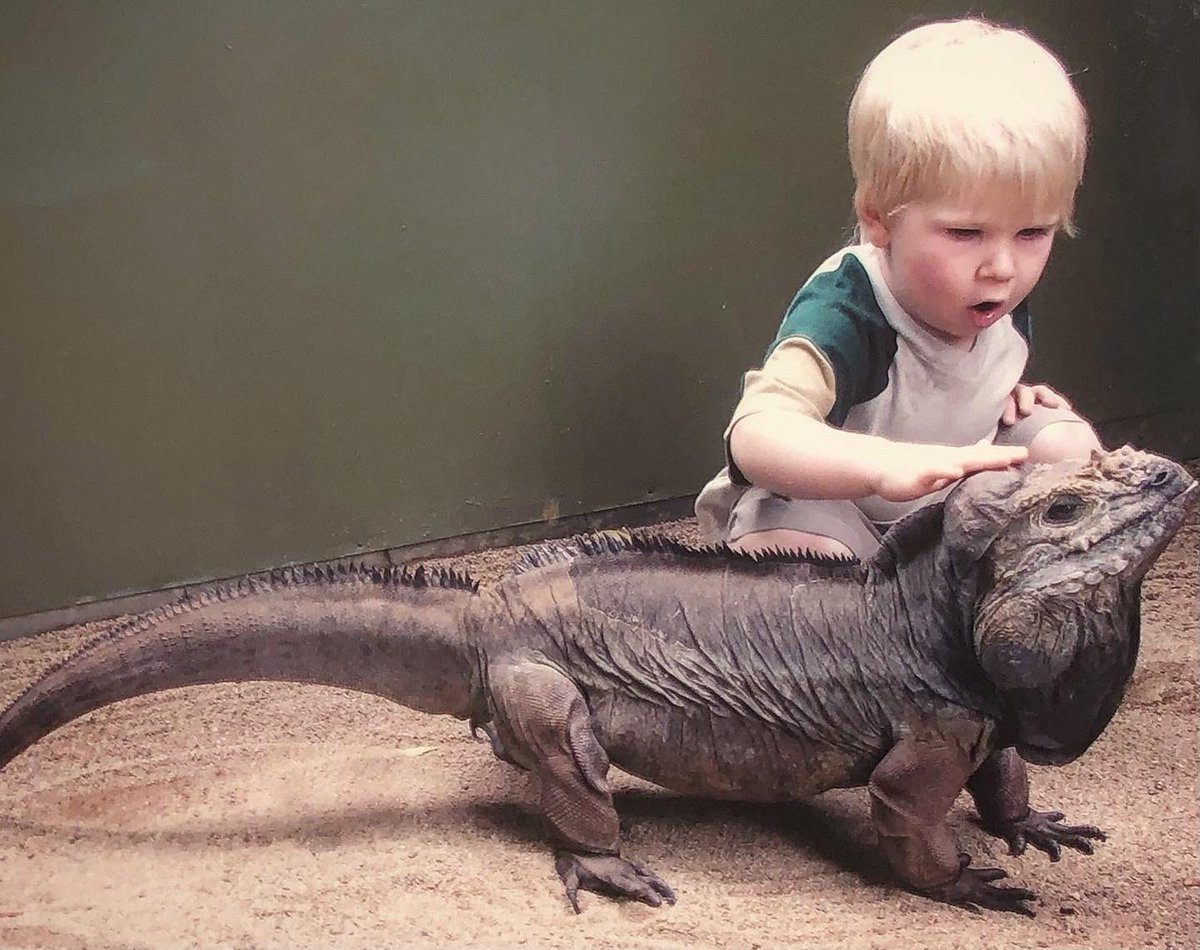 I've known 'Rhino' the Rhinoceros iguana for my entire life but his story began long before I was around - now he's just made history in the Guinness World Records as the oldest rhinoceros iguana in the world! He's now 41!! We love this old man so much! 😁