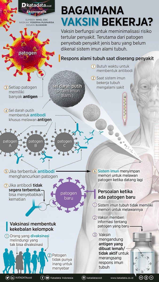 Vaksin berfungsi untuk meminimalisasi risiko tertular penyakit. Terutama dari patogen penyebab penyakit jenis baru yang belum dikenal sistem imun alami tubuh. Lantas, bagaimana cara vaksin bekerja? #Infografik