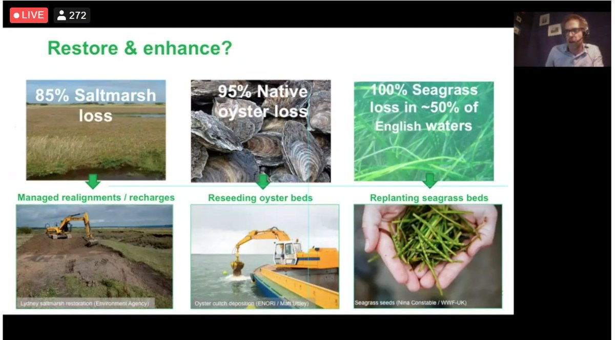 On Day 3 of #CoastalFutures21 @saltmarshben is kicking off session on #Restoration & #Recovery: #NatureBasedSolutions, Benefits & Challenges.   👇With the decline of #Saltmarsh, #Oysters and #Seagrass in the UK...there is a lot of work to do 🌊🌱🦪 #GenerationRestoration
