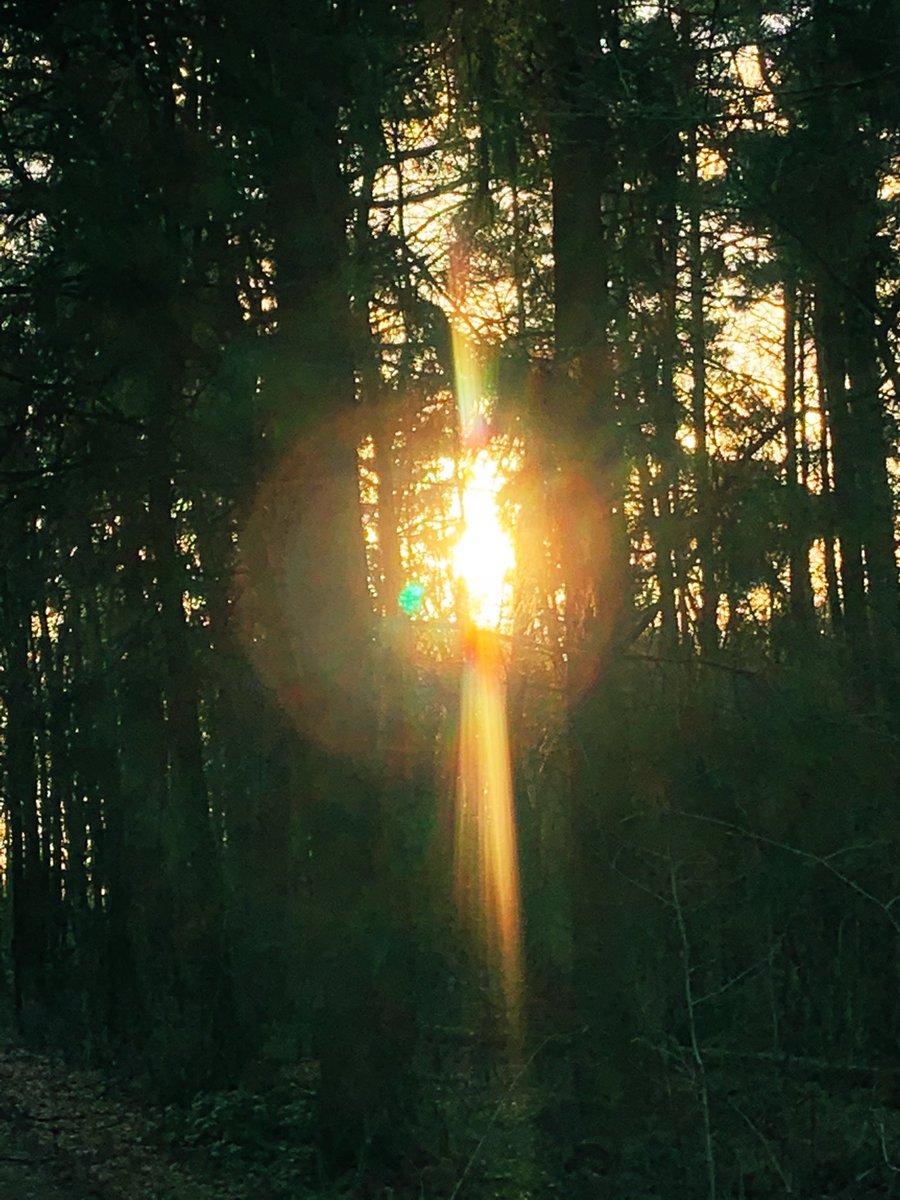 Ja hoor, vanmorgen 'gevangen' in het bos..., daarna weer losgelaten voor andere bezoekers... #zonnestraal #thursdaymorning #thursdayvibes