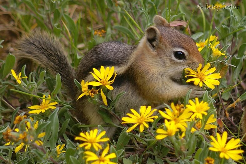 #SquirrelAppreciationDay