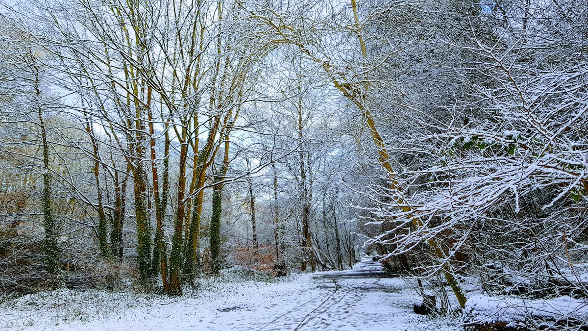 More snow! #snow #SNOWUK #Weather #woodland #thursdaymorning #StaySafe