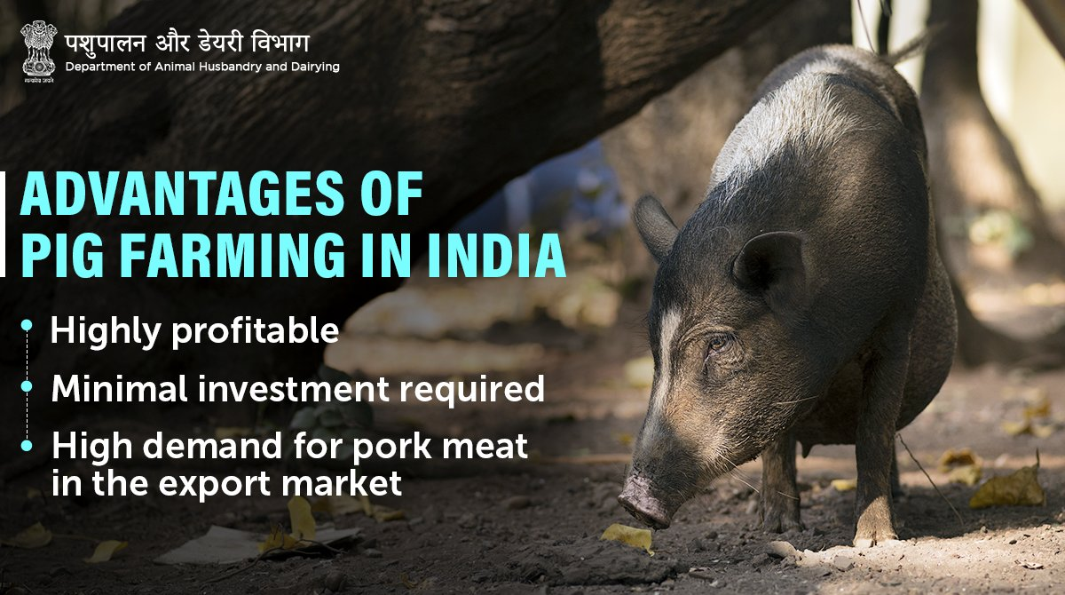 With little #investment in #farm & equipment, proper #feeding, & timely #vaccination of #pigs, #PigFarming is a profitable #livestock business for small-scale #farmers.  #Unite2FightCorona #AnimalHealth #HealthyAnimals #AnimalWealth