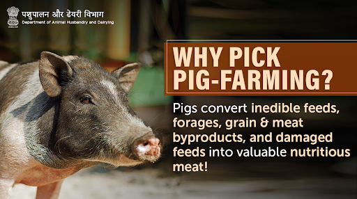🐷🐗 Factors that make #PigFarming sustainably viable: ➡Efficient feed conversion ➡Short generation intervals ➡Provide high-quality manure #Unite2FightCorona #AnimalHealth #HealthyAnimals  #AnimalWealth