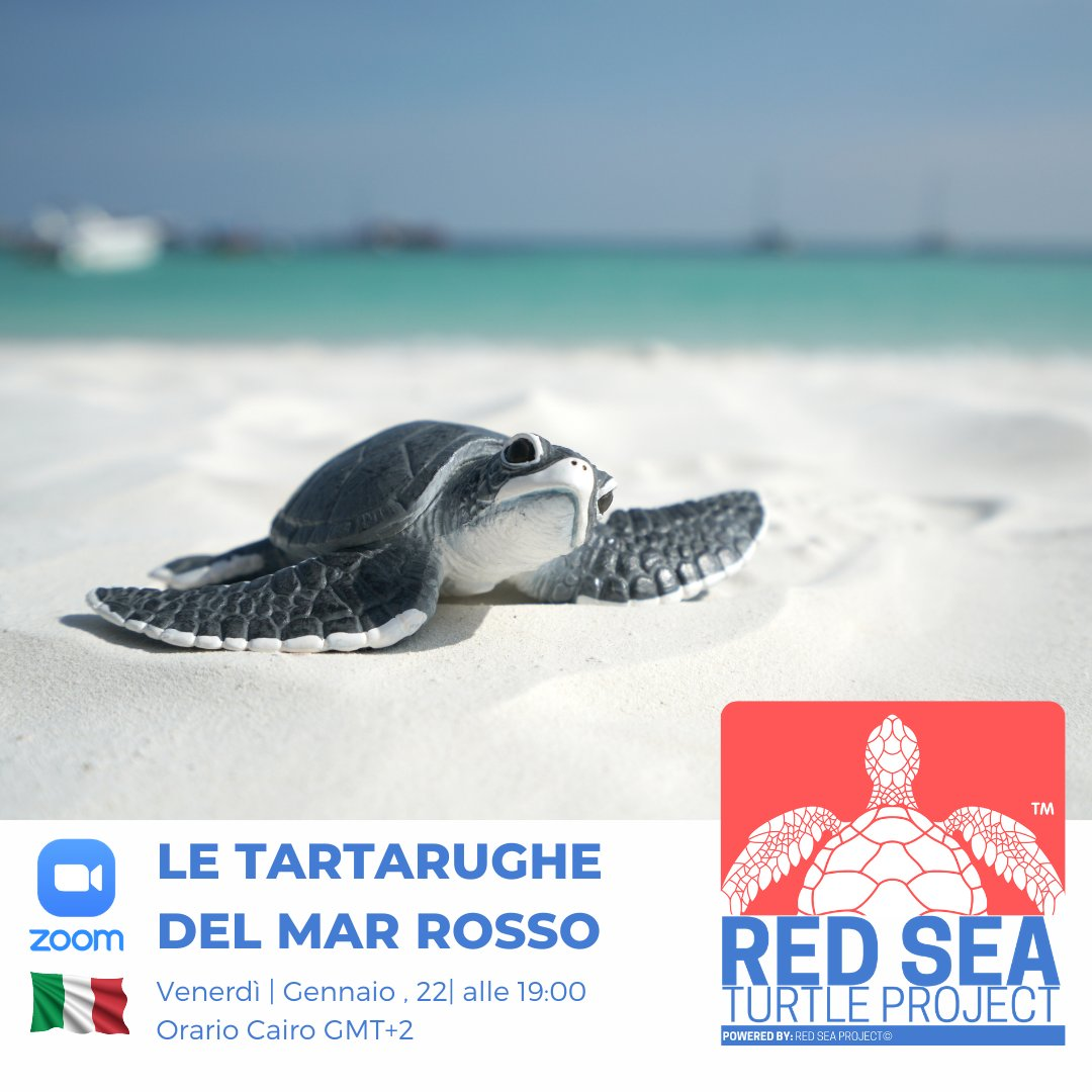 #WebinarAlert: Attention all Italian speaking ocean lovers! Join us tomorrow, Jan 22nd @ 7pm GMT+2, for our #Free #Webinar on #Turtles of the Red Sea.   Register Now:   #ocean #conservation #italiano #lockdown #COVID19  #marinelife #learnsomethingnew