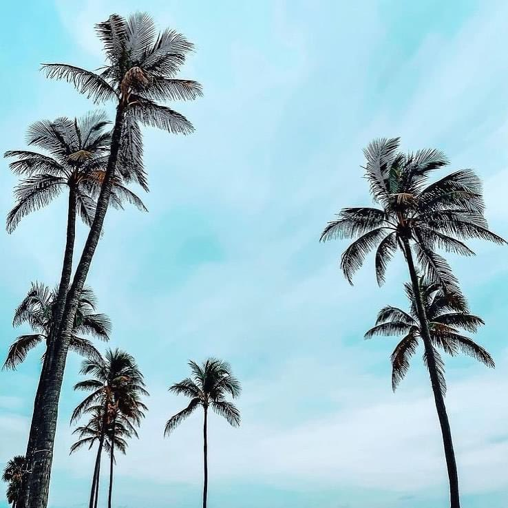 Good Morning!😎☀️🌴🏖#SouthFlorida #January #Thursday #StaySafe #WashYourHands #WishYouWereHere #SocialDistancing #Paradise #LoveWhereYouLive #Sun #Sand #Sea #RealEstate #Buyers #Sellers #Realtor @BalistreriRE @TarekHabal