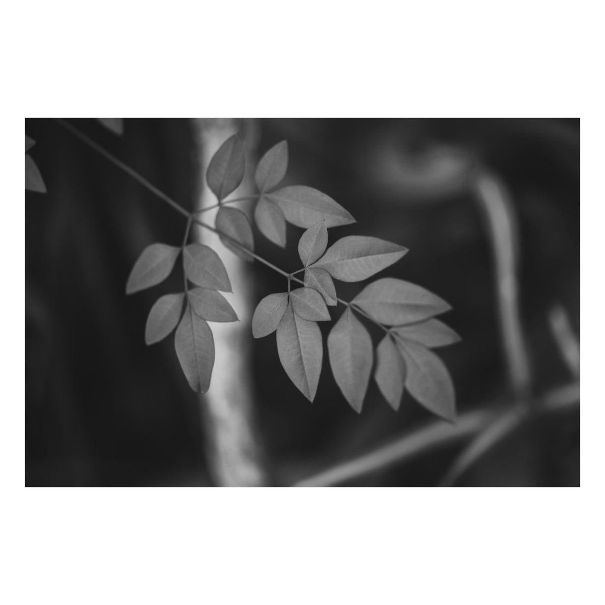 凛と。 #写真 #ファインダー越しの私の世界  #写真シェア #写真好きと繋がりたい #monochrome #モノクロ #モノクロの世界 #Nikon #Z6 #マクロプラナー #Makroplanar #Milvus #お写ん歩 #vsco