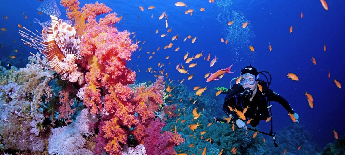 Коралловые рифы – одна из самых ценных эколого-экономических экосистем нашей планеты. Охватывая менее 0,1% мирового океана, они поддерживают более 25% морского биоразнообразия и жизнь до миллиарда человек. #поколениевосстановления #GenerationRestoration